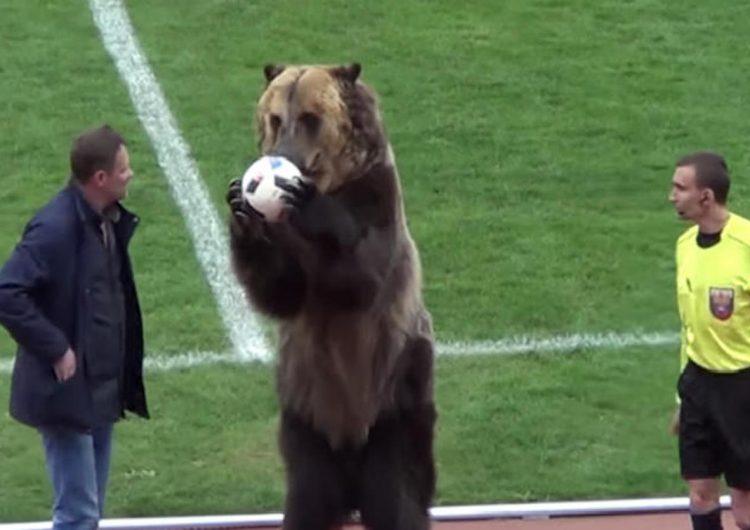 activistas-oso-trucos-futbol