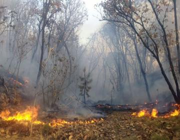 Controlan incendio en bosque La Primavera en Jalisco; afectadas 2 mil 200 hectáreas