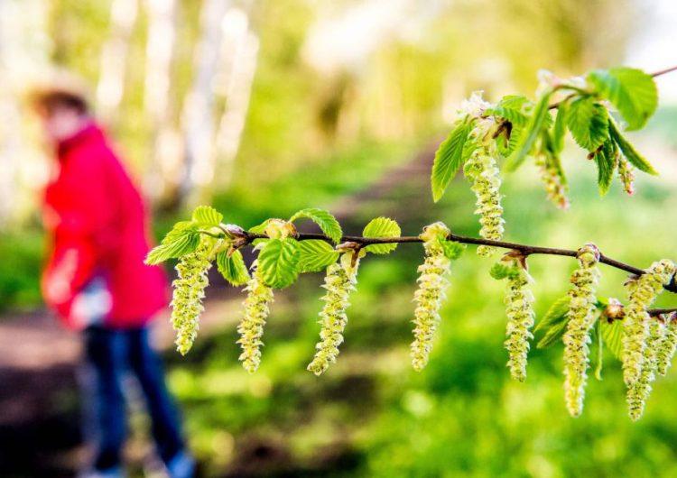 alergias-cuerpos-primavera