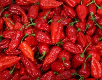 """Esta es la clave para comer con seguridad el Carolina Reaper, el chile """"más picante del mundo"""""""