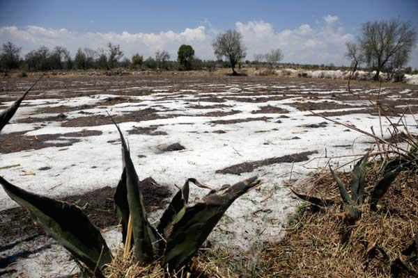Censo de daños por granizada en 7 municipios