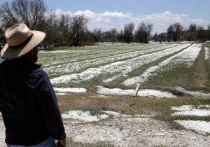 Aún sin cuantificar daños por granizada en Tepeaca