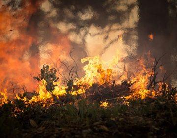 Se registran 15 incendios forestales