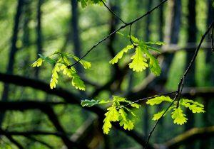 Ordenan reparación del daño a reserva ecológica Peña Colorada