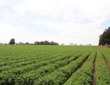 Concluyó foro de consulta de la Ley de Desarrollo Agrícola en el Congreso