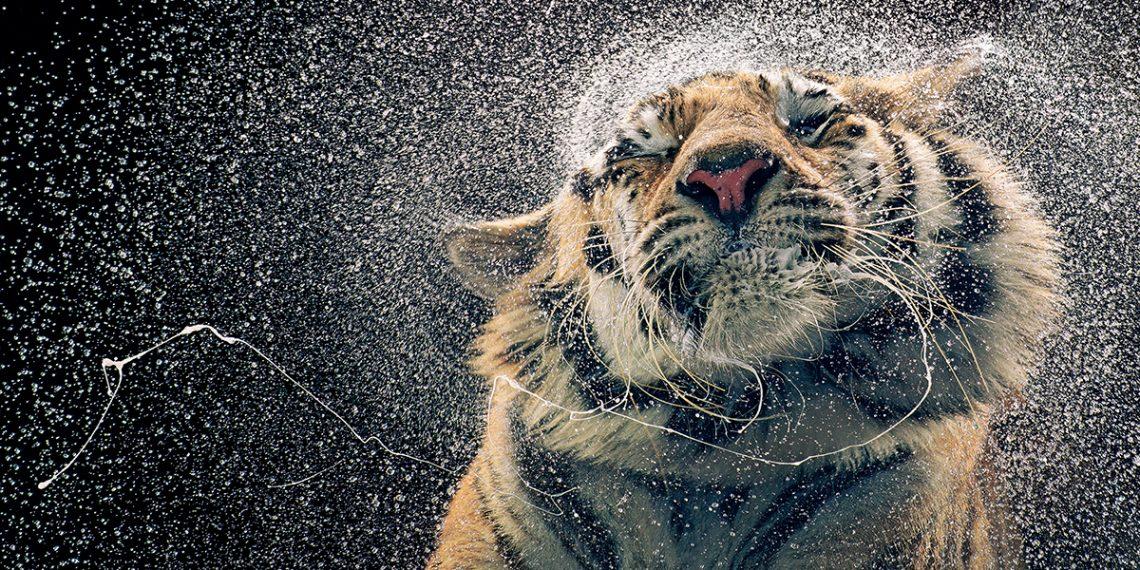 animales-extincion-fotografo-tim-flach