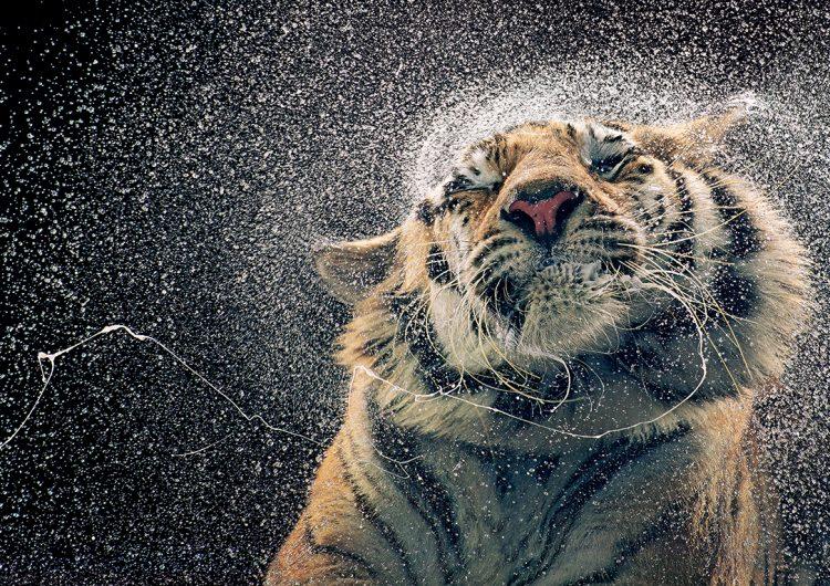 Retratos de la extinción: un fotógrafo captura las semejanzas entre especies amenazadas y los humanos