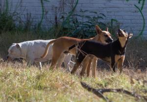 México abandona al 70 % de sus mascotas: es primer lugar en Latinoamérica de animales en situación de calle