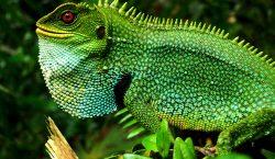 Rescatando la biodiversidad: por qué salvar a las especies ayuda…