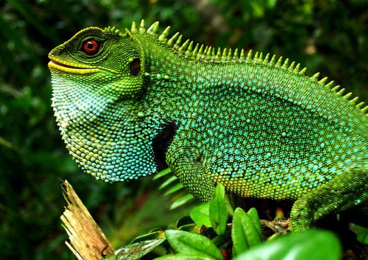 Rescatando la biodiversidad: por qué salvar a las especies ayuda a nuestro bienestar
