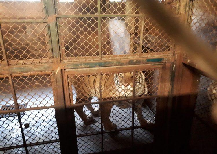 Aseguran 49 felinos por maltrato en Zoológico de Puerto Vallarta