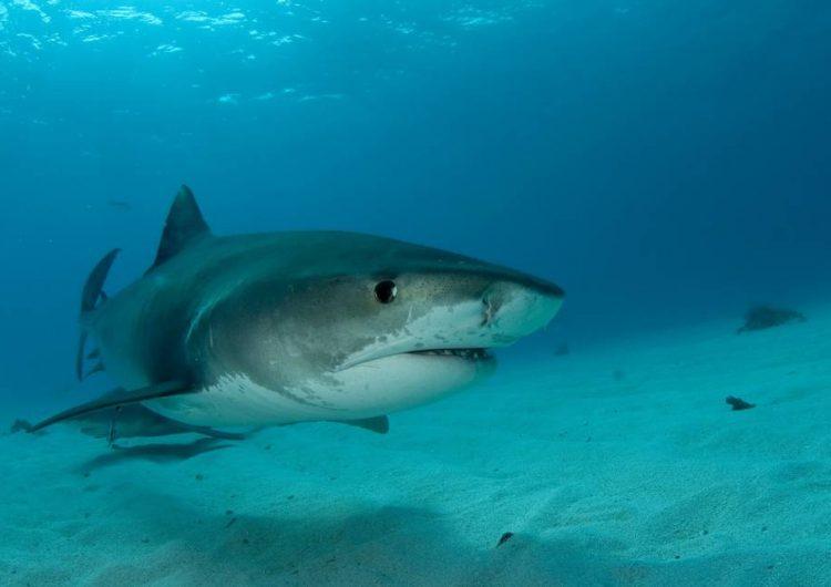 Tiburón ataca a adolescente de 15 años que vacacionaba en Florida