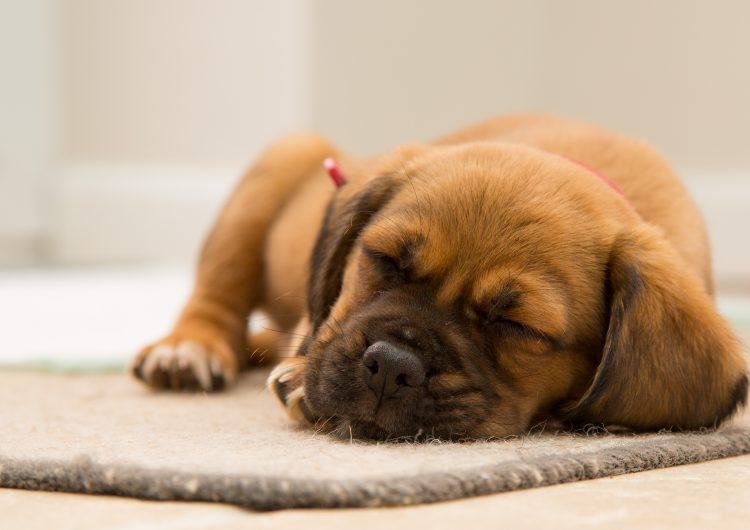 Crecer con mascotas y lejos de la ciudad te hace mentalmente más sano
