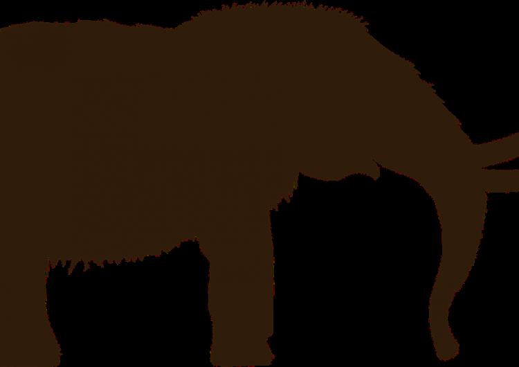 Descubren restos de mamut en SLP