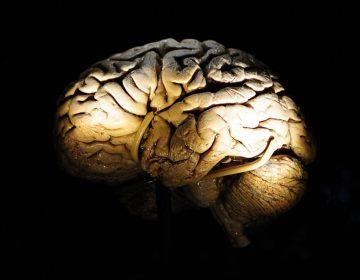 Holografía cerebral: pronto podríamos ser capaces de editar nuestros recuerdos