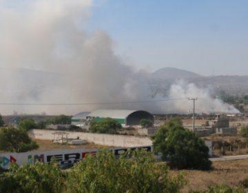 Pide Greenpeace castigar a responsables de quemazón