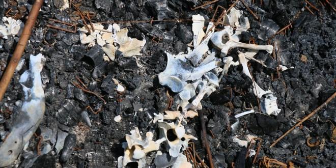 Registran perro quemado y seis crías agredidas