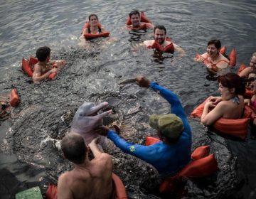"""Quitan dientes a delfines para """"proteger"""" a turistas en isla """"paradisíaca"""""""