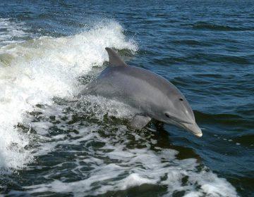 Ucrania: delfines del Ejército murieron de hambre después de la anexión rusa