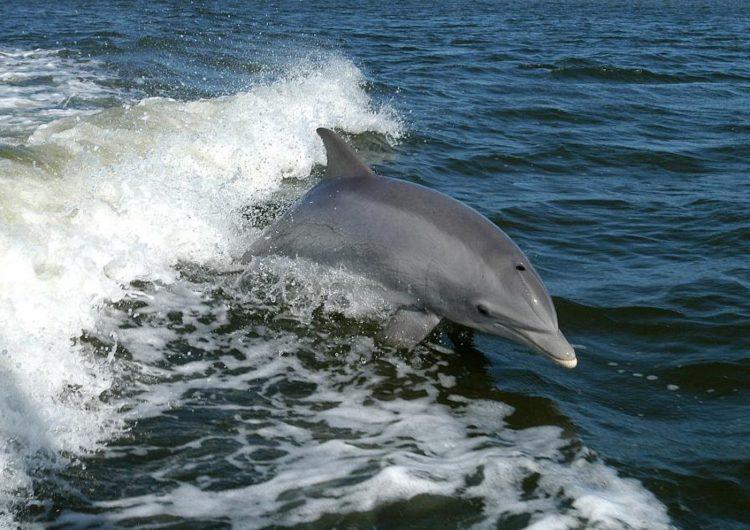 ucrania-delfines-ejército-murieron