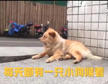 Un perro anciano que espera diariamente a su dueño en el metro conmociona a China