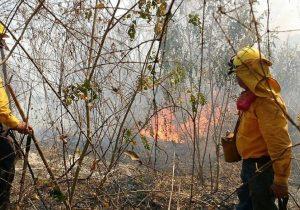 Incendios dañan más de 13 mil hectáreas en Oaxaca