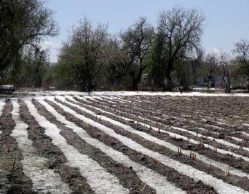 Sagarpa niega afectaciones por lluvia y granizo