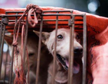¿Qué es la influenza canina? Los veterinarios advierten de un virus altamente infeccioso