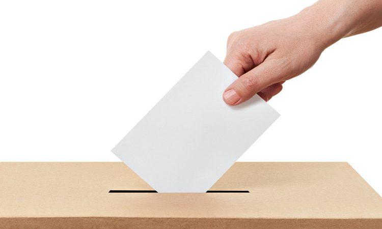 La elección más grande en la historia del país, pero recortan 68% el presupuesto para la observación electoral