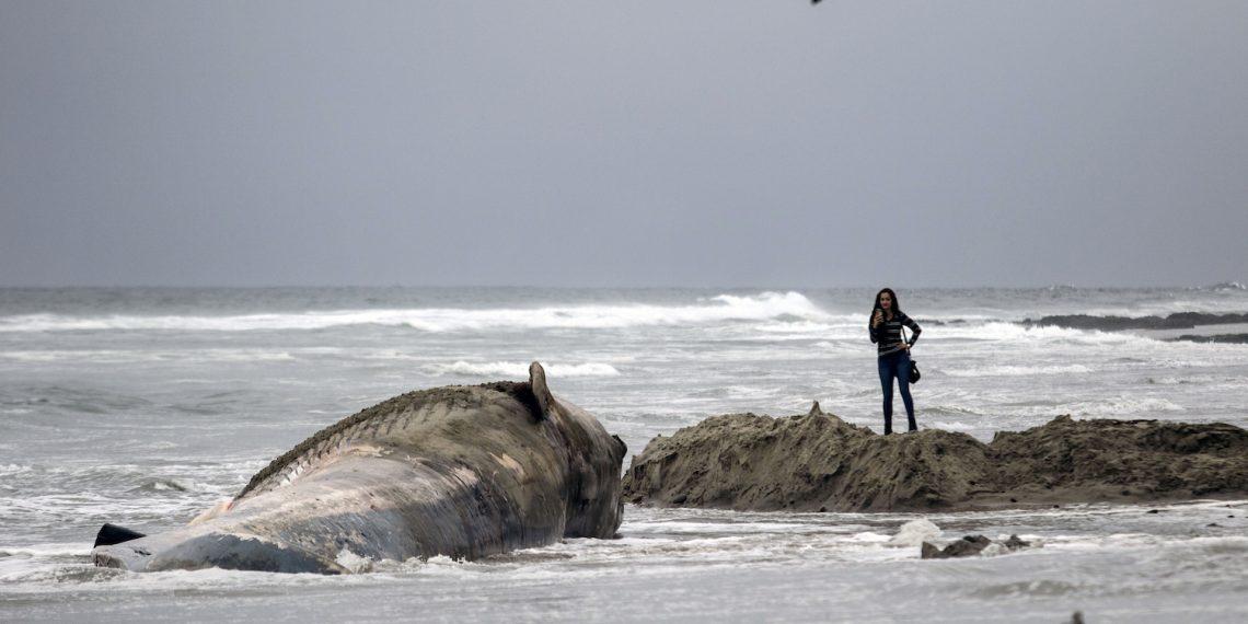muere-ballena-tragarse-bolsas-plástico