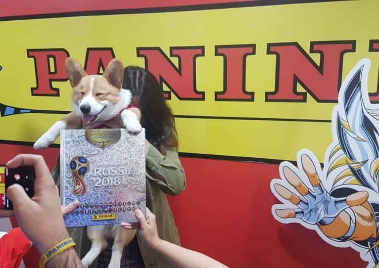 Comerse un álbum Panini fue el mejor regalo mundialista de este perrito a su dueña