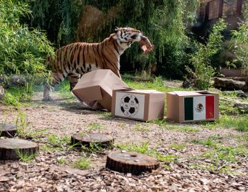Estos son los animales que predijeron los resultados del Mundial