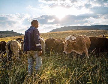 La posesión de la tierra polariza a Sudáfrica