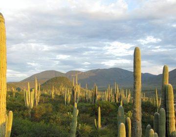 Un valle mexicano entre los nuevos patrimonios de la humanidad