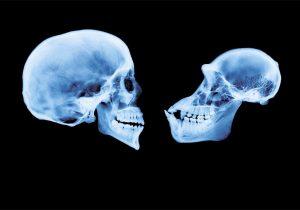 Una triada de genes esculpió nuestro cerebro