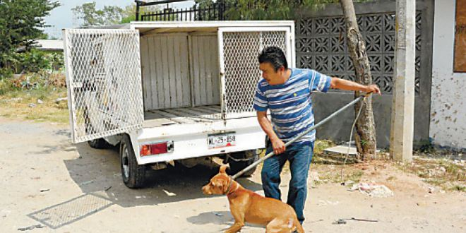 Sacrifican a 86% de los canes que recibe antirrábico de Pachuca