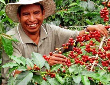 Baja 18% la producción cafetalera en Hidalgo