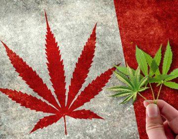 Canadá aprueba la venta y consumo recreativo de mariguana