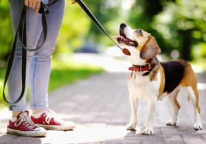 ¿Quieres vivir más? Camina más rápido, sugiere un nuevo estudio