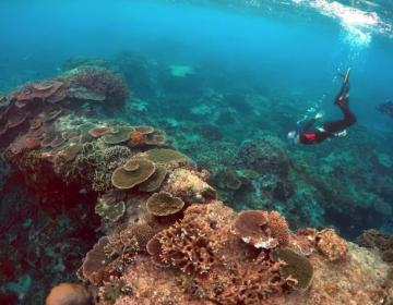 Hawái prohíbe bloqueadores solares que destruyen el coral