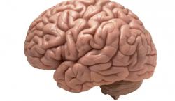 Cada cerebro es único, según la ciencia: ¿Cómo es el tuyo?