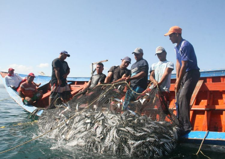 Uno de cada tres peces para consumo humano termina en la basura
