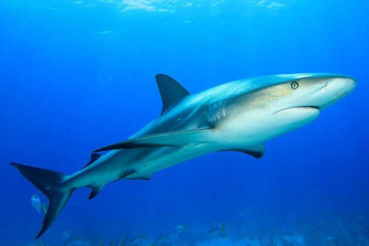 ¿Podría haber aceite de tiburón en tu lápiz labial? Las compañías cosméticas usan este ingrediente como base