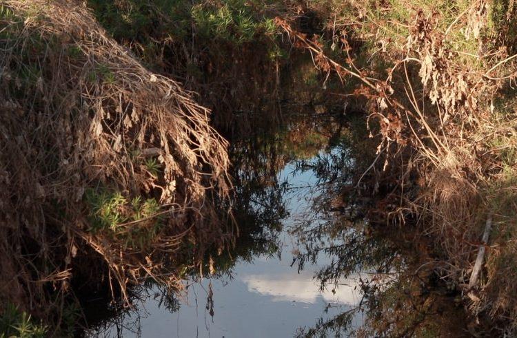 Incierto, futuro de la Pona y bosque de Cobos
