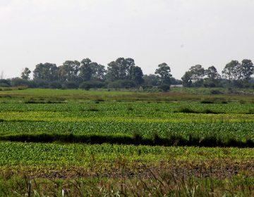Denuncian campesinos opacidad en recursos de sistemas producto