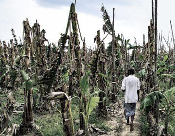Sequía, deuda y suicidio, la nueva plaga en India