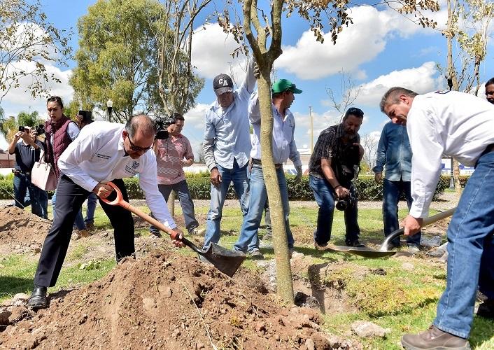 Inicia gobierno programa integral de reforestación de especies de gran tamaño
