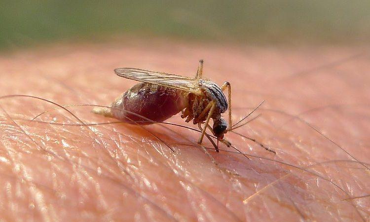 Comienza campaña contra el mosquito causante de dengue y Zika en Jalisco