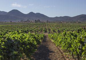 El apasionado lado indígena del vino bajacaliforniano