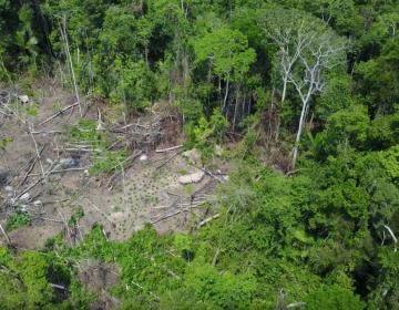 Drones captan a una tribu indígena totalmente aislada en la Amazonia brasileña